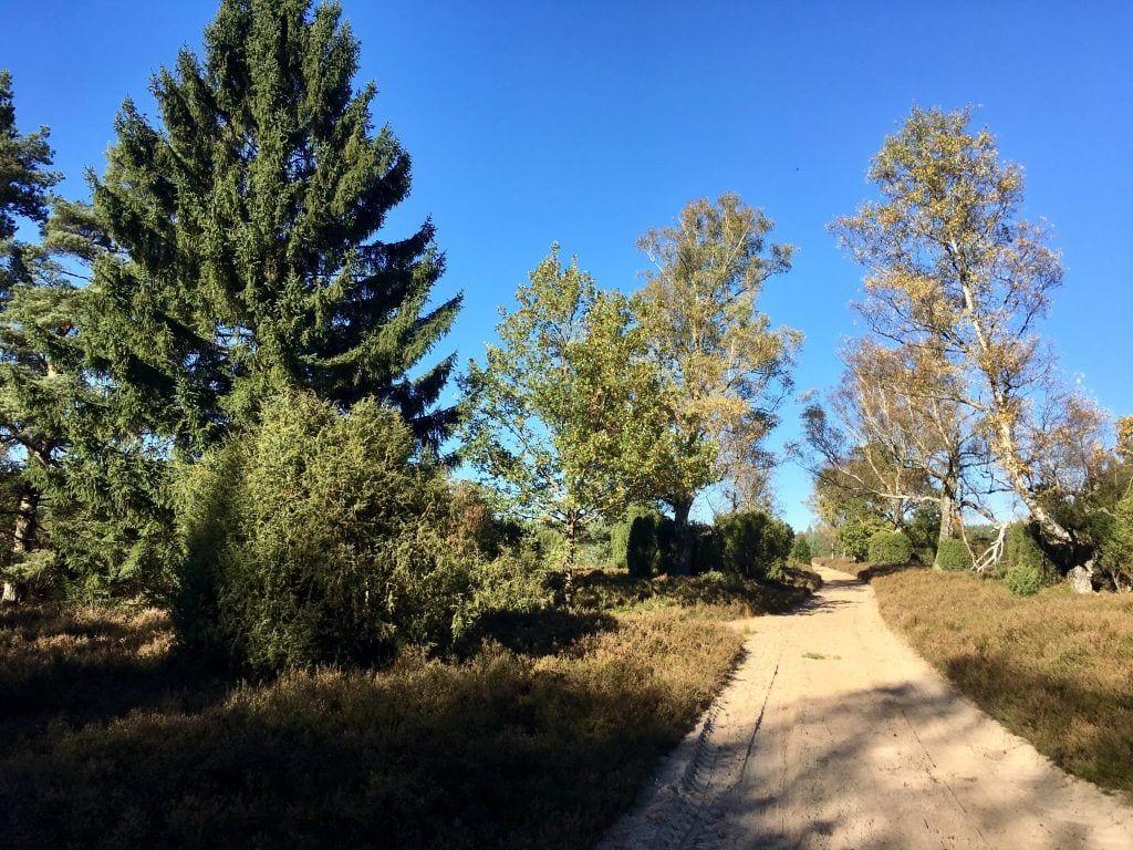 Von Bispingen nach Amelinghausen: Wandern durch die Rehrhofer Heide