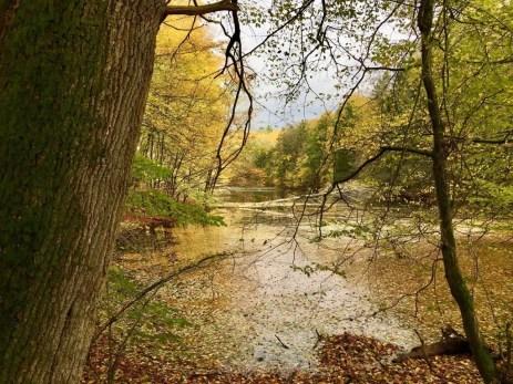 Traumhafter herbstlicher Waldsee in der Hahnheide