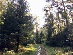 Wanderweg im Staatsforst Rosengarten
