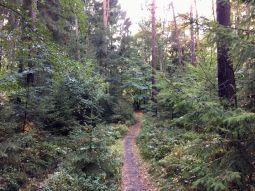 Wanderweg in den Harburger Bergen