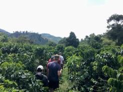 Besichtigung der Kaffeeplantagen auf der Hacienda Venecia