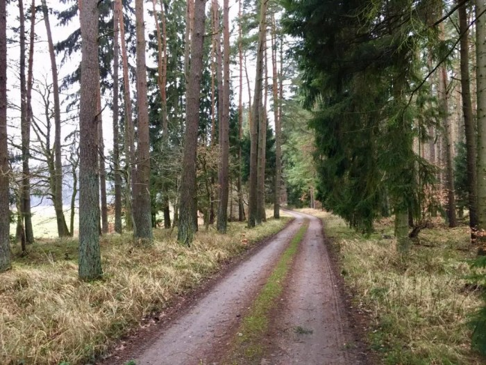 Mountainbike-Rundtour - Waldweg bei Buddenhagen