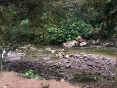 Der Rio Buritaca am Morgen nach dem Regen - ganz entspannt