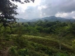 Vom Regenwald bedeckte Hügel