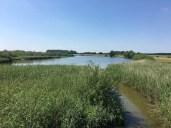 "Am ""Radegaster Haken"" bei Bleckede an der Elbe"