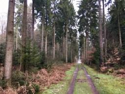 Wanderung von Buchholz in die Fischbeker Heide - Waldweg