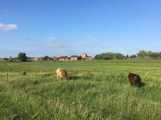 Weidelandschaft an der Elbe in Sandau