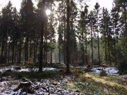 Winterliche Lichtung im Stuvenwald