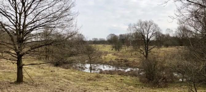 Mountainbiken in Hamburg: Einmal Natur und zurück