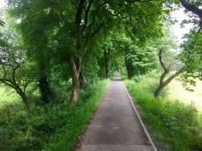 Fahrradtour auf dem Elberadweg: Selten habe ich so eine schöne Radweg-Allee gesehen, wie hier bei Dessau