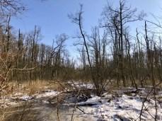 Typischer Moorwald - Wanderung im Duvenstedter Brook