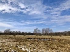 Die Wilde Weidelandschaft im Naturschutzgebiet Höltigbaum