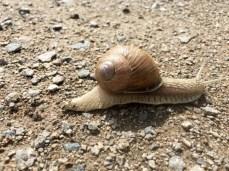 Ein tierischer Wegbegleiter auf dem Elberadweg