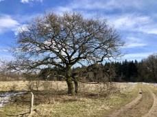 Winterliche Reste im Naturschutzgebiet Höltigbaum