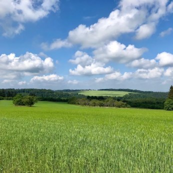 Die Landschaft rund um die Traumschleife Ehrbachklamm in Rheinland-Pfalz