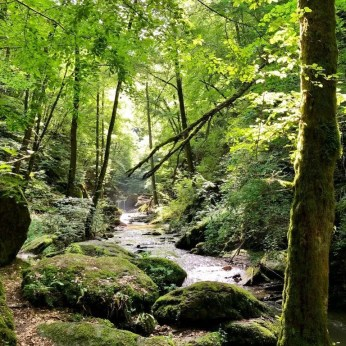 Üppiges Grün und wilde Romantik erwarten Dich in der Ehrbachklamm bei Boppard