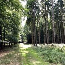 Wanderweg im Papendorfer Forst bei Lassan