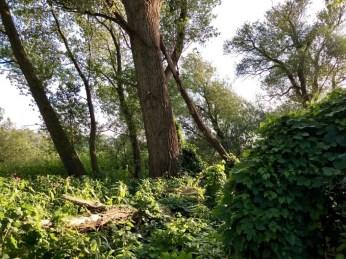 Wilde Uferlandschaft im Heuckenlock
