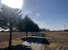 Der Radweg zwischen Neeberg und Sauzin auf Usedom