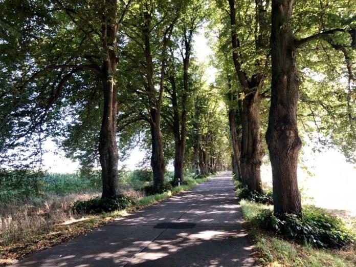 Die Allee nach Krummin auf der Insel Usedom