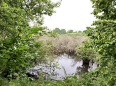Wilde Natur zwischen Eksholmssjön und Häckeberga
