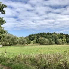Tolle Landschaft bei Sellhorn in der Lüneburger Heide