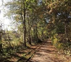 Auf ins Himmelmoor: Entlang der Schienen der Torfbahn geht es in die Kernzone