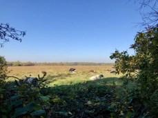 Idyllische Weideflächen am Himmelmoor