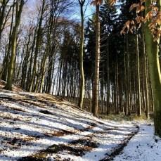 Auf dem Waldweg am Schierensee