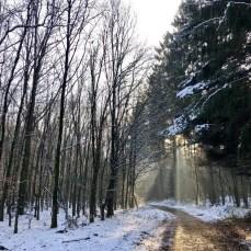 Im Winterwald nördlich des Schierensees in der Holsteinischen Schweiz