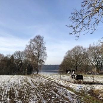 Pferde auf einer Koppel am Belauer See