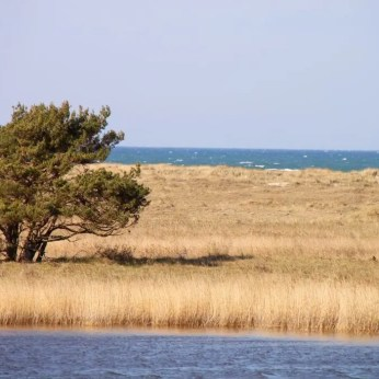 Landschaft an der Nordspitze des Darß