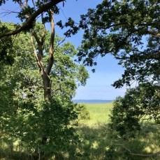 Wandern in Vorpommern: Blick vom Waldrand bei Freest auf den Greifswalder Bodden
