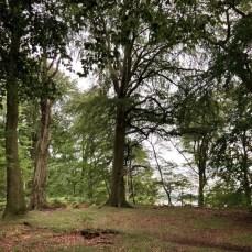 Wald auf der Nordspitze des Großzecher Werder auf der Wanderung am Schaalsee
