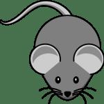 تعلم رسم فأرة