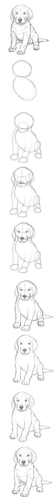 تعلم رسم كلب خطوة بخطوة