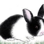 تعلم رسم أرنب