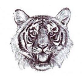 تعلم رسم نمر بالخطوات