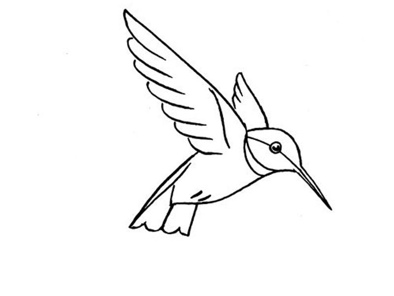 رسم طائر الطنان