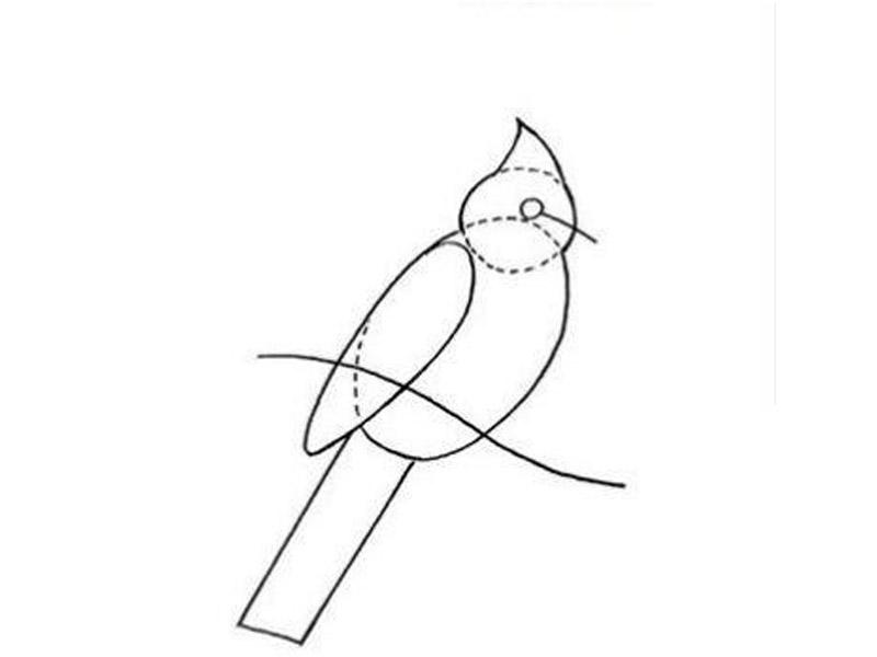 تعلم رسم طائر واقف على غصن