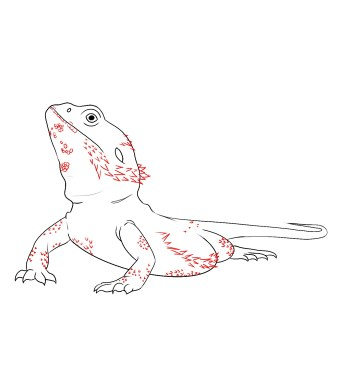 How To Draw A Bearded Dragon Step 6