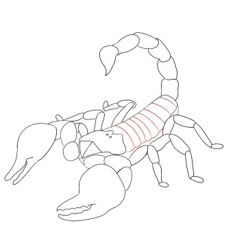 How To Draw A Scorpion Step 8