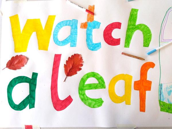 Watch a leaf fall