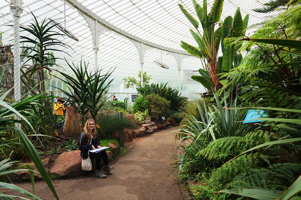 Drawing in the jungle at the Botanic Gardens