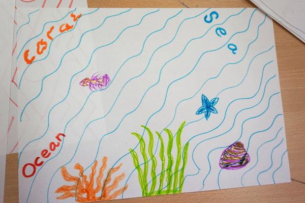 Exploring shells and corals