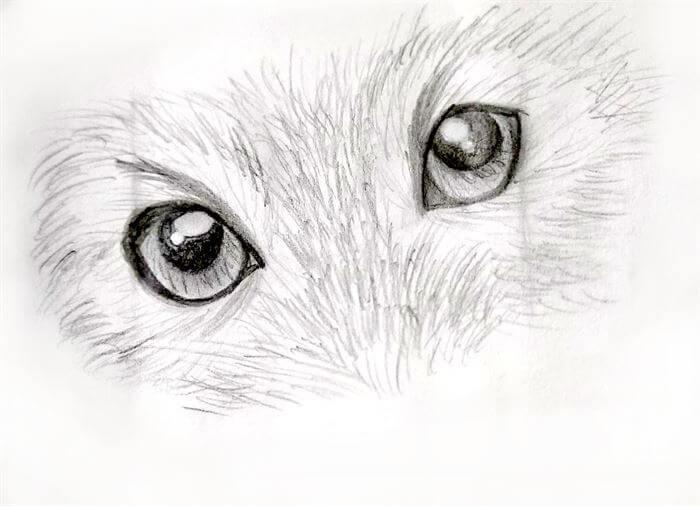 Step 10-dog eye drawing