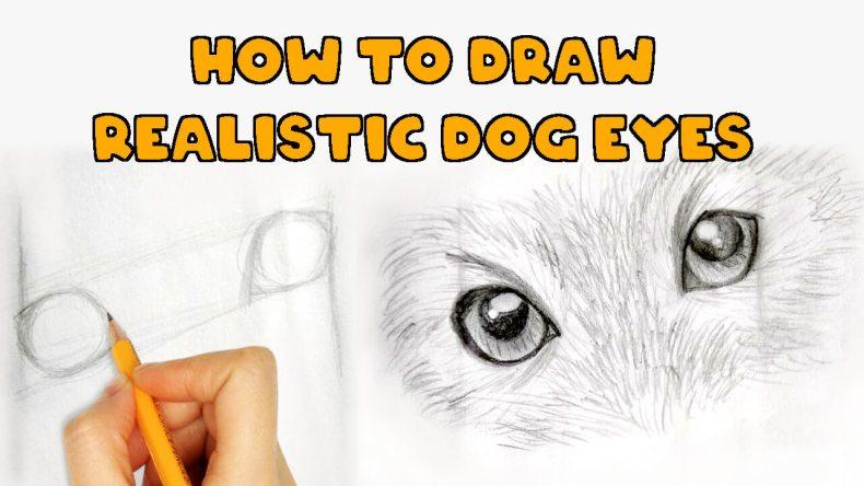 dog eyes drawing