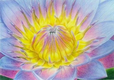 Purple Lily, coloured pencil, 2011