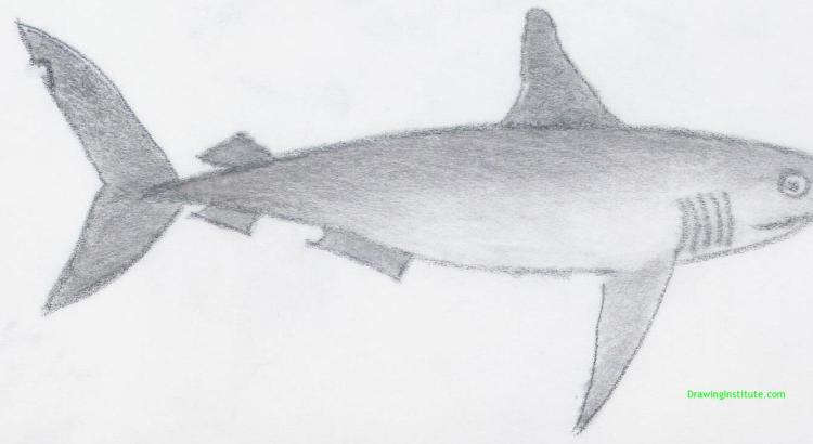 How To Draw A Shark Step By Step For Kids