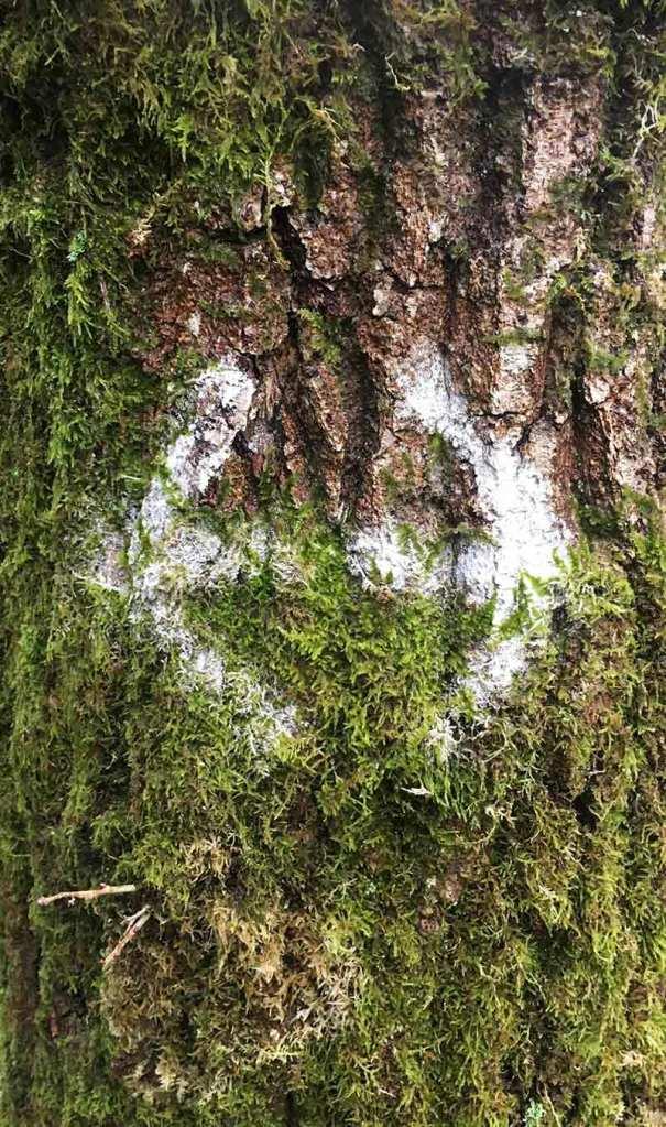 Forest Rune VIII by Victoria Burton-Davey